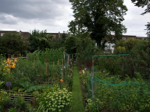 the best plot at Northfields Allotments
