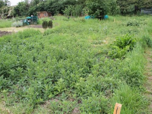My new allotment plot on Northfield Allotment