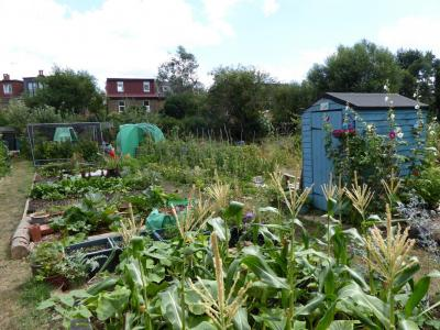 Northfields allotments best traditional full plot