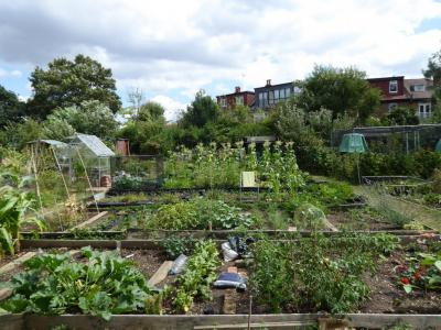 Northfields allotments best gardening club