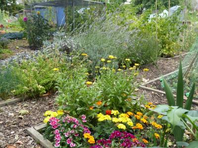 Northfields allotments best herb bed