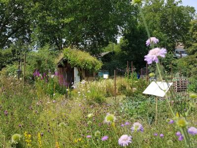 Northfields allotments best wildflowers