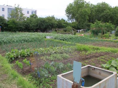 EDAS open day - Best Traditional Allotment