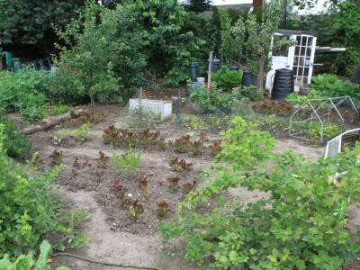 EDAS open day - Best Allotment on Site