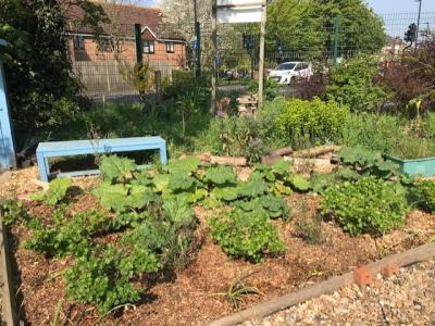 Northfields allotment