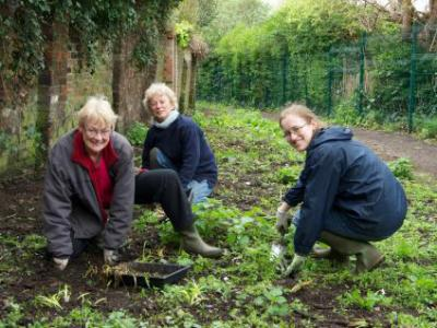 Planting Bluebells and snowdrops in April