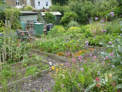 Northfields allotment summer 2019