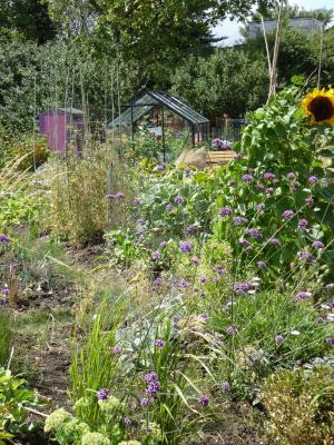 Northfields allotments best contemporary half plot