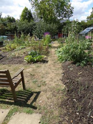 Northfields allotments best side path