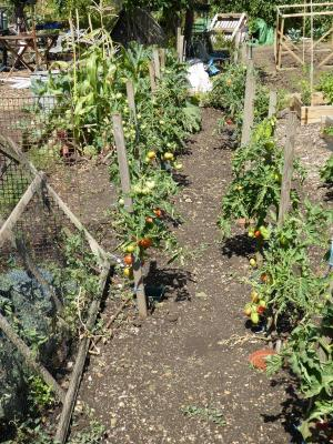 Northfields allotments best traditional half plot