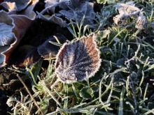 Frosty morning in Ealing Dean Allotments