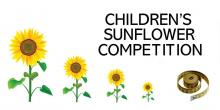 different size sunflowers for the EDAS sunflower competition