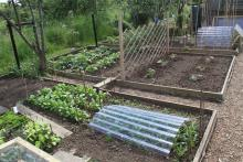 A well cared for allotment plot