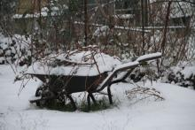 wheelbarrow in winter - Ealing allotments