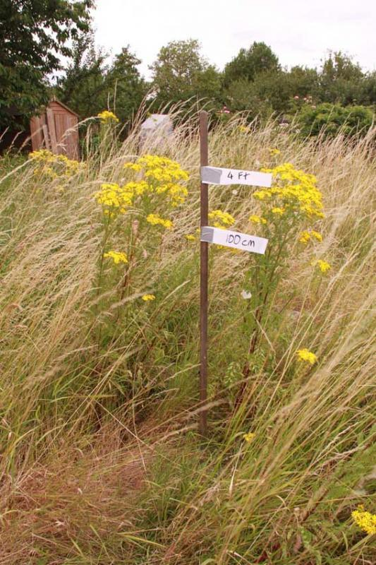 plots with a large proportion of weeds going to seed will receive a non-cultivation letter